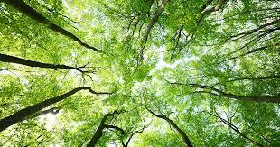 """""""Regala un albero alla tua città"""": L'appello di Legambiente Amelia"""