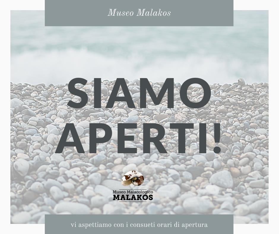 RIAPRE IL MUSEO MALACOLOGICO MALAKOS, GESTITO DALL'OMONIMA ASSOCIAZIONE