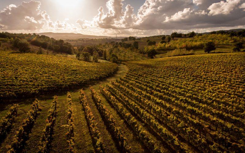 """""""Montefalco-Spoleto Grand Tour"""", il sapere e il sapore delle cantine dell'Umbria. Da novembre 2020 a febbraio 2021"""
